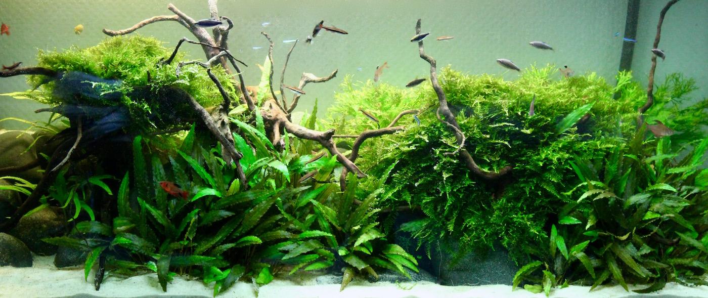 Flossenheld-Aquaristik-Service-Berlin-Aquarium-Arztpraxis