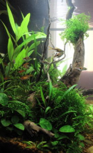 Flossenheld-Aquarienpflege-Arztpraxis