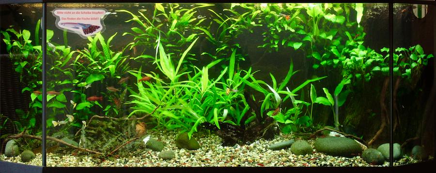 Flossenheld-Aquaristik-Service
