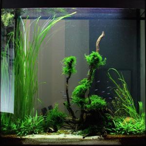 Flossenheld-Aquaristik-Service-Berlin-Aquarium-fuer-Ihre-Arztpraxis
