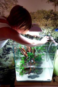 Schulprojekt - Aquarium-Flossenheld-Aquaristik-Service-Schulprojekt - Aquarium-gestalten