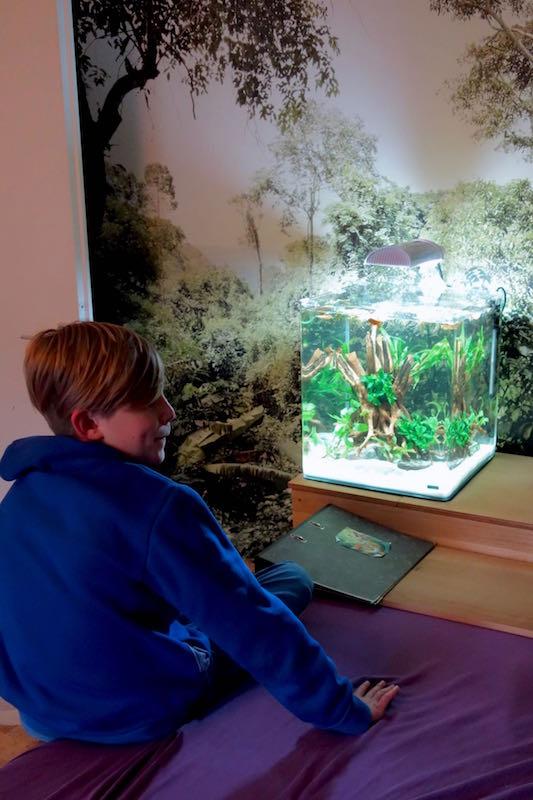 Flossenheld-Aquaristik-Service-Schulprojekt-Berlin-Aquarium-gestalten