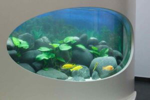 Flossenheld-Aquaristik-Service-Pflege-Senioren